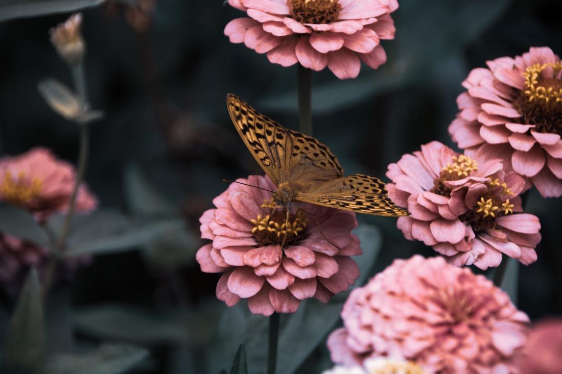 flowers-3975556_1920.jpg